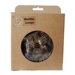 Morilles sauvages